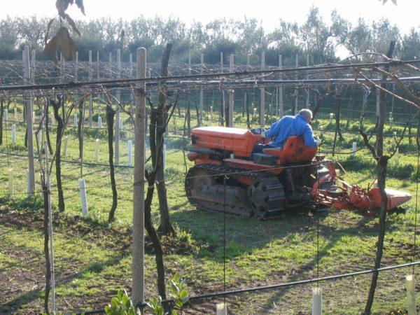 Naturnaher Weinbau