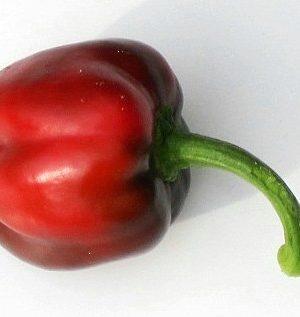 Bulgarische Paprika