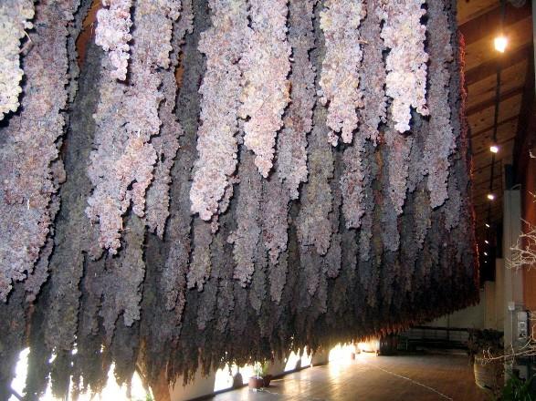 Amarone della Valpolicella Le Guaite di Giulietta Pizzighella-424