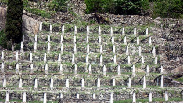 Steinpfeiler in der Steillage