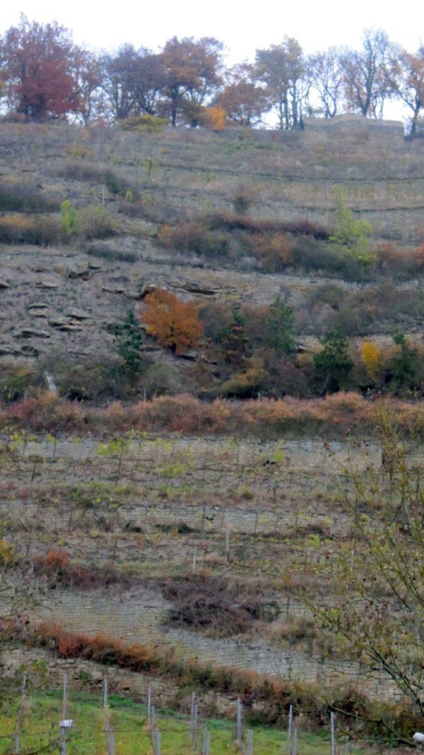 Südhang des Disibodenberg
