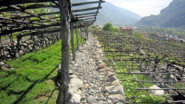 Aostatal - Donnas: Alpen-Nebbiolo