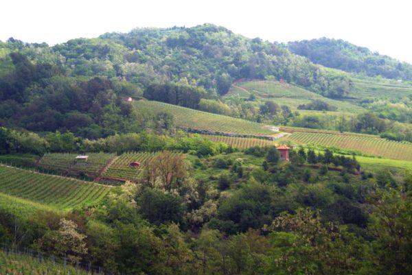 Gattinara am Alpensüdrand: Alpen-Nebbiolo