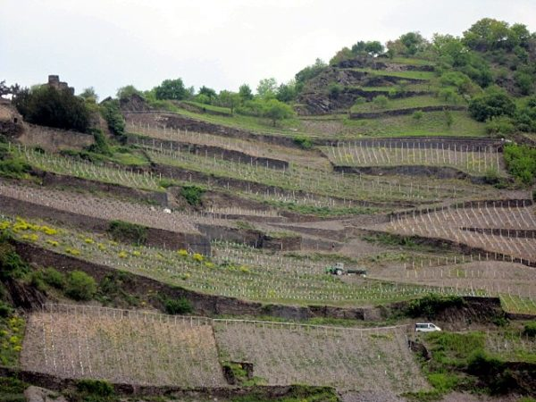 Terrassen am Mittelrhein