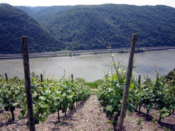 Unten der Rhein...