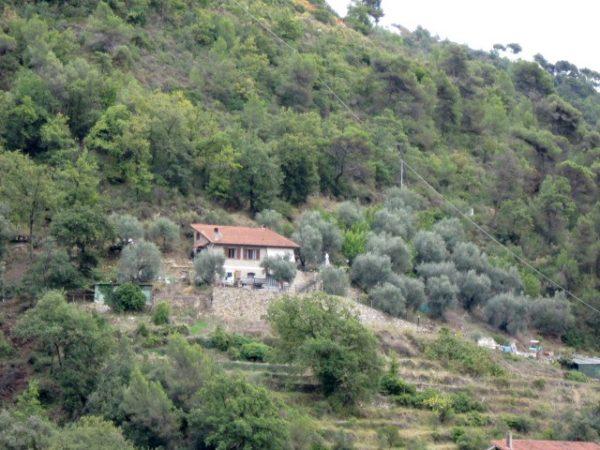 Weinbau am Waldrand