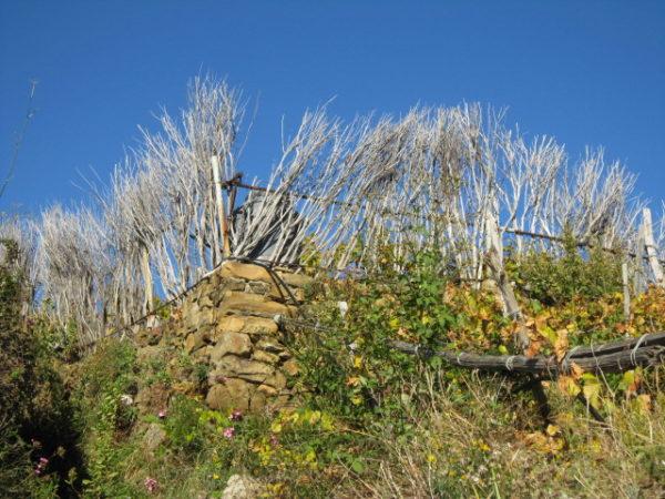 Cinque Terre - wo die Weinberge in den Himmel wachsen