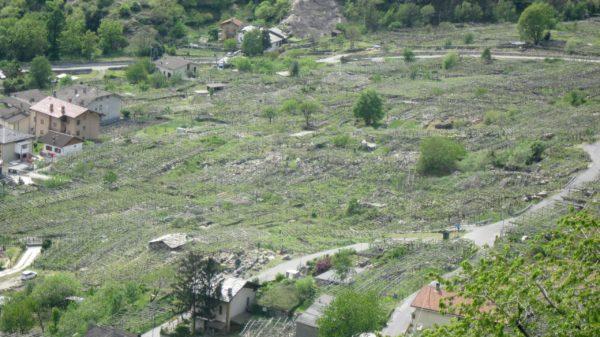 Aostatal - Weinberge in einem 1000 jahre alten Felssturz