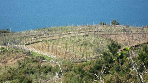 Cinque Terre - Blick auf den Golfo della Spezia