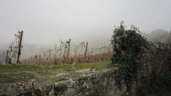 Südhang des Disibodenberg im Herbst