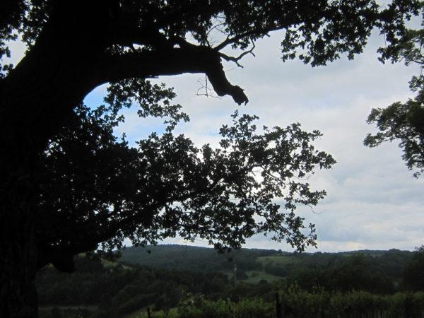 Blick von uralter Eiche auf den disibodenberg ins Glantal