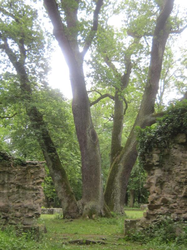 Alte Klosterpforte