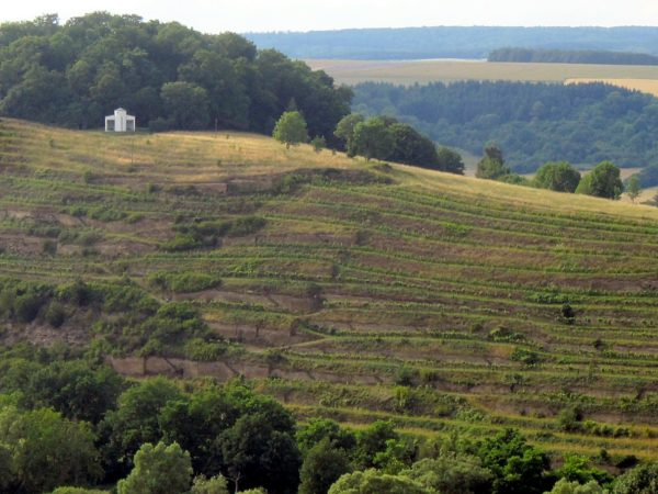 Disibodenberg :: extrem steile, uralte Terrassen :: oben linksn die neue Hildegardis-Kapelle