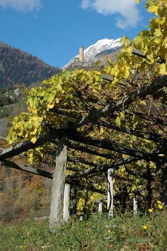 Blanc de Morgex mit Monte Bianco: Alm-Wein