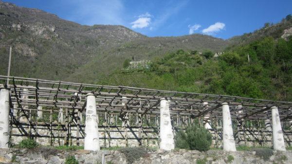 Carema riserva-4539