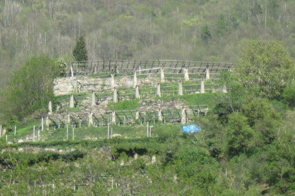 Carema riserva-4540