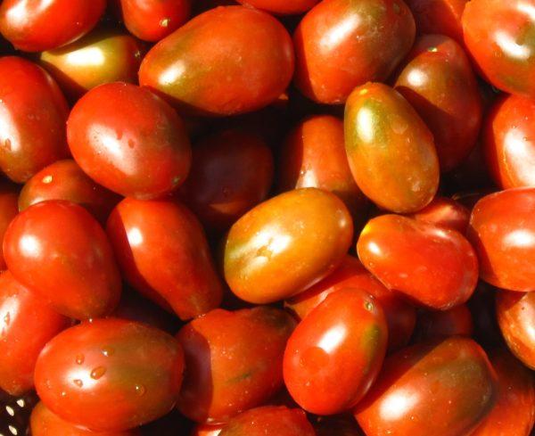Red Plum Samen-5118