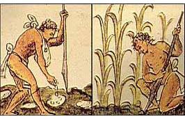 Maisanbau im alten Peru