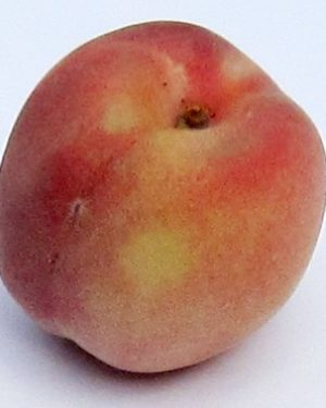 Weissfleischiger wurzelechter Pfirsich