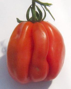 Zapoztekische Tomate