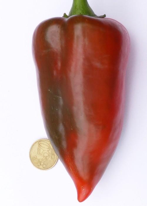 Frühzauber