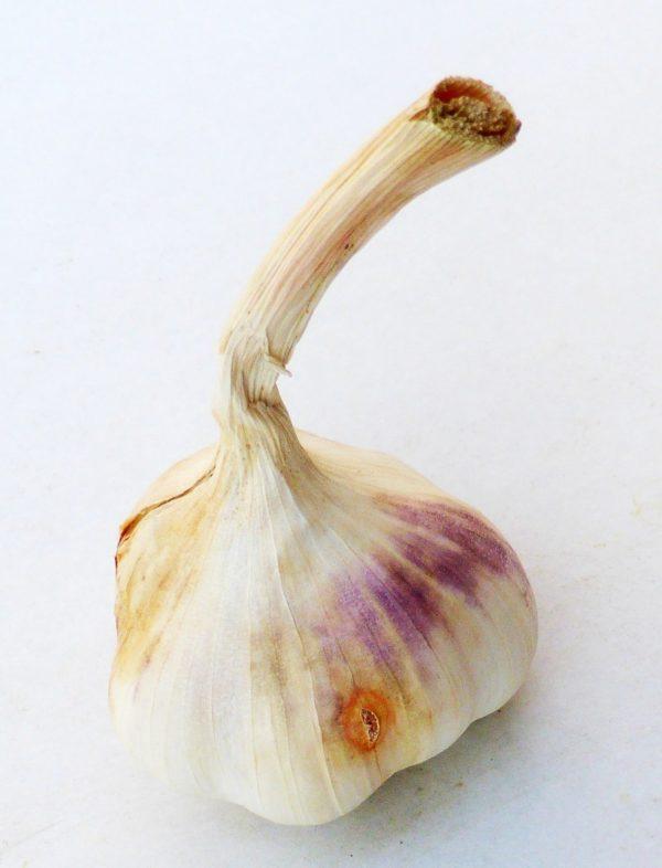 Pflanz-Knoblauch BLANCOMOR de Vallelado-0