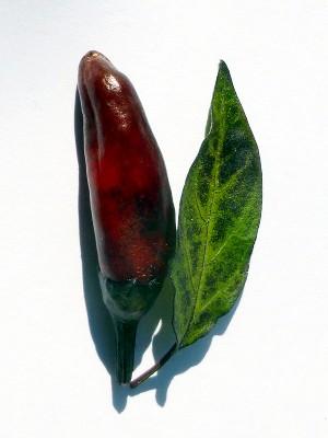 Azteco-Chili