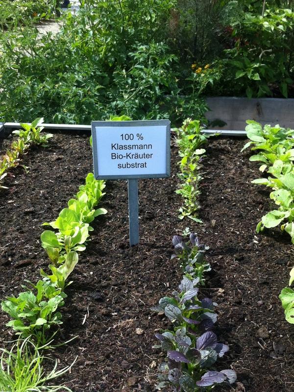 Pflanzen mit herkömmlichen Substrat