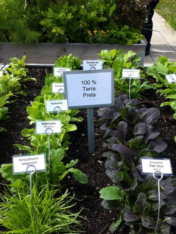 Pflanzen mit Terra Preta als Substrat