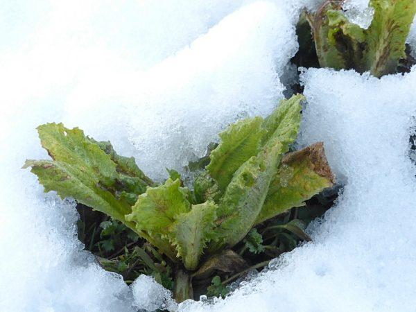 Winter-gärtnern