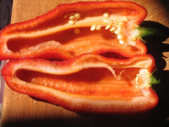 Galizische-Paprika Pflanze-8746