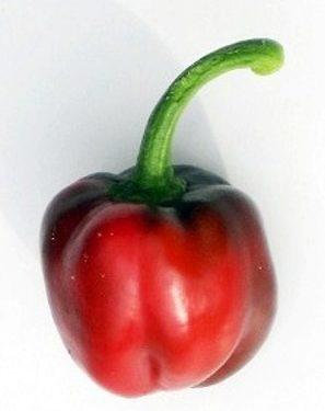 Bulgarische-Paprika