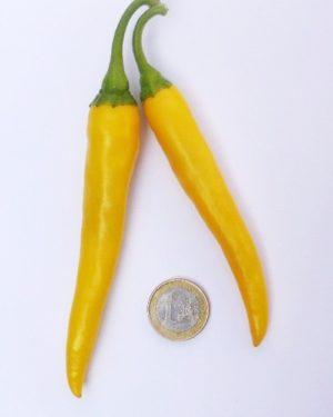 Gelebe rumänische Chili