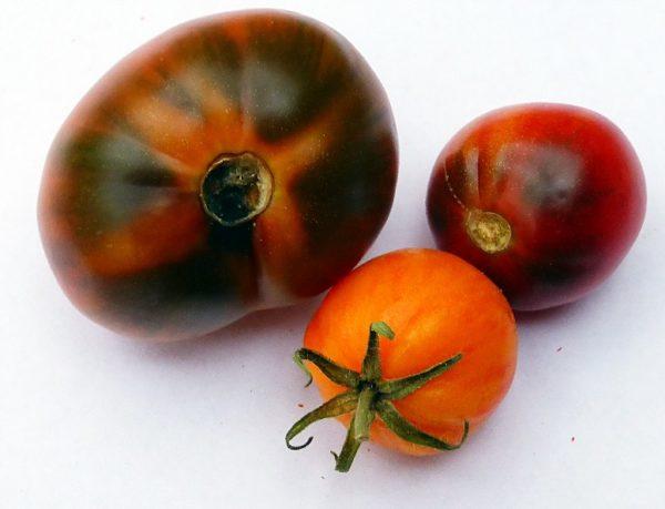 Black-Sea-tomate