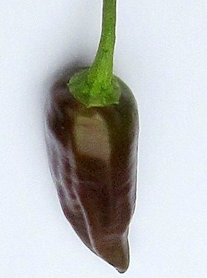 Ethiopian Chili