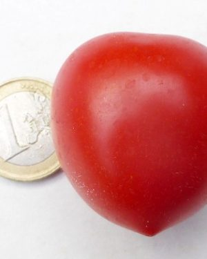Tomate Ruthje