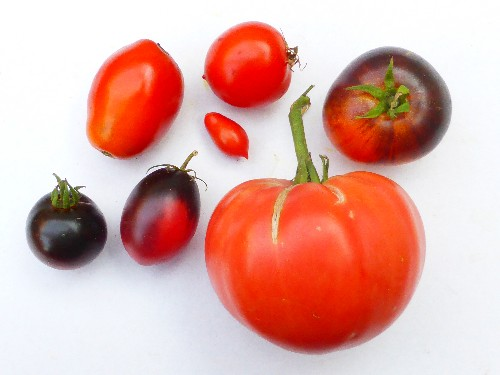 Tomatensortiment