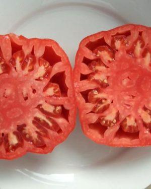 Tomate Chilo della Garfagnana