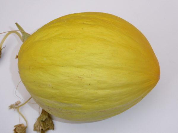 Melone di Cosenza