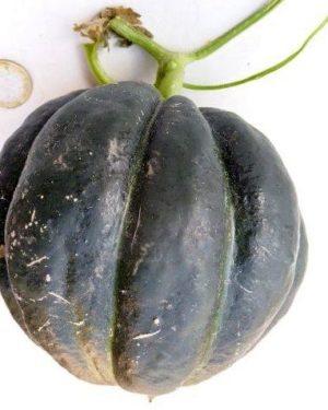 kasachische-obstmelone